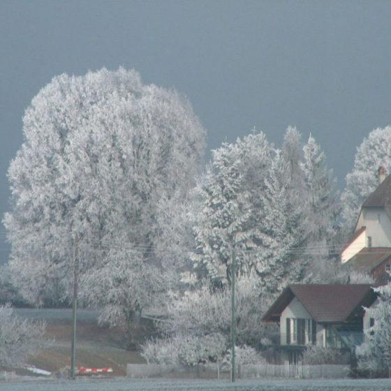 Frostiger Januar